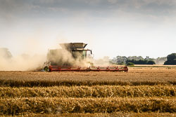 Class Lexion 780 Combine at Gathering the Harvest, Navenby Fens, Lincolnshire, August 2018. Photo: Neil Houltby