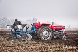Massey Ferguson MF135 at Collingham Ploughing Match, South Scarle, Lincolnshire, February 2019. Photo: Neil Houltby