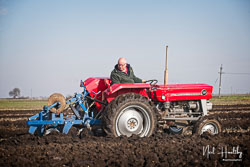 Massey Ferguson MF135 at Newborough Plouging Match, Newborough, Cambridgeshire, February 2019. Photo: Neil Houltby