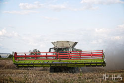 Class Lexion 780 Combine at Gathering the Harvest, Navenby Fens, Lincolnshire, August 2019. Photo: Neil Houltby