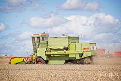 Claas Dominator 85 Combine at Gathering the Harvest, East Bridgeford, Nottinghamshire, August 2019. Photo: Neil Houltby